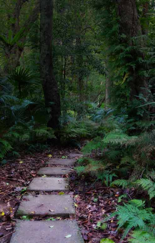 Mount Keira track